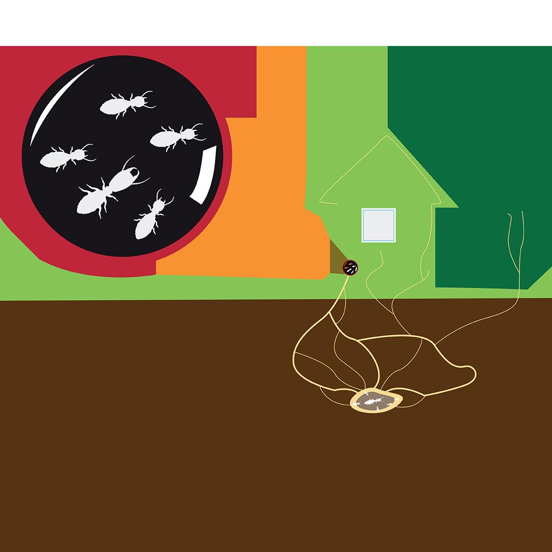 Termites Element Pest Control Termite Control Methods